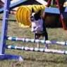 Ann Jump2